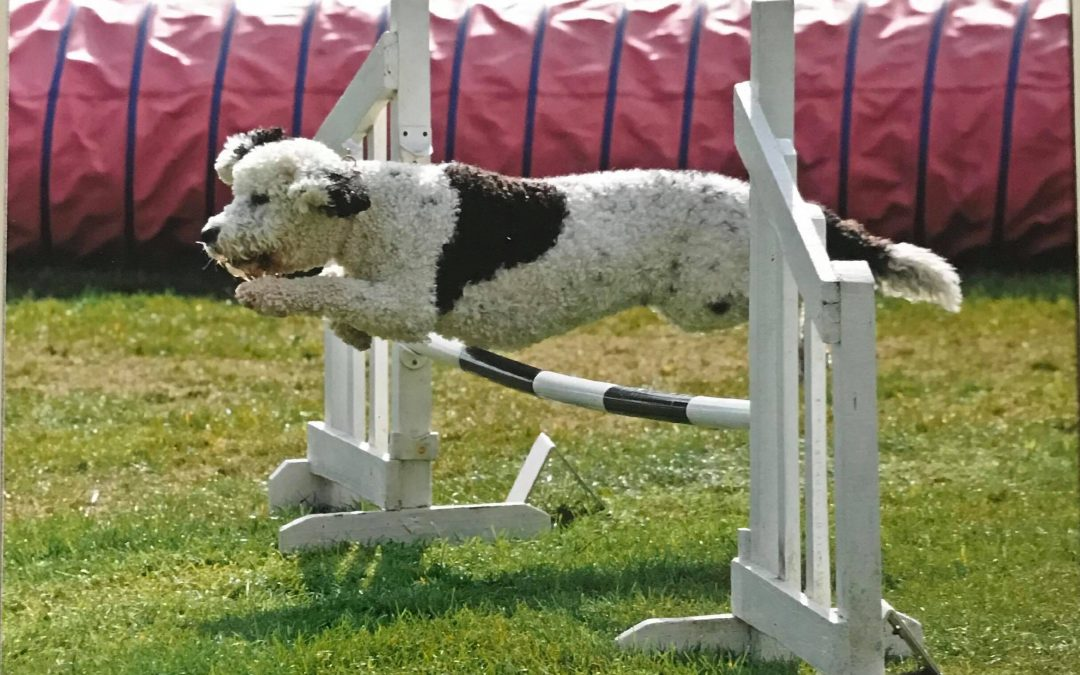 Dog Agility – We Finally Smashed It